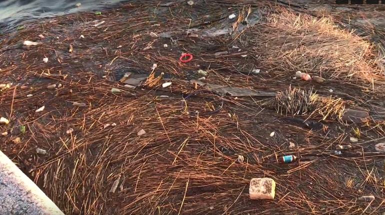К берегам Невы в районе Свердловской набережной прибило мусор