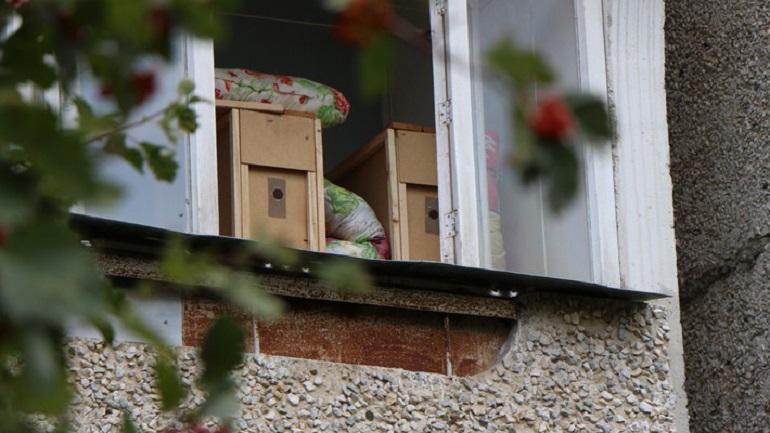 В Ломоносовском районе пенсионерку спасли от нашествия пчел