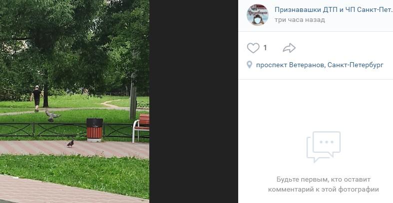 В Красносельском районе неадекватный мужчина измазал скамейки калом