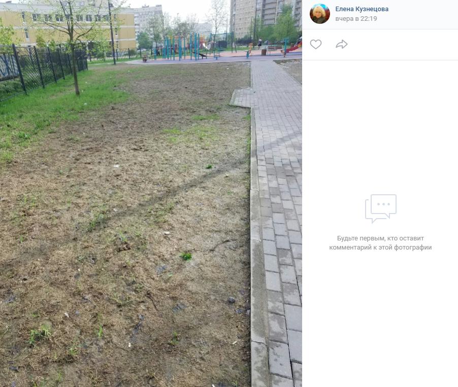 Жара превратила Петербург в пустыню с высохшей травой и гибнущими деревьями