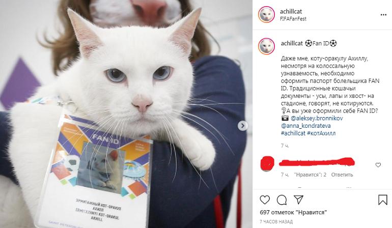 Эрмитажный кот Ахилл предсказал итоги матча Словакии с Польшей