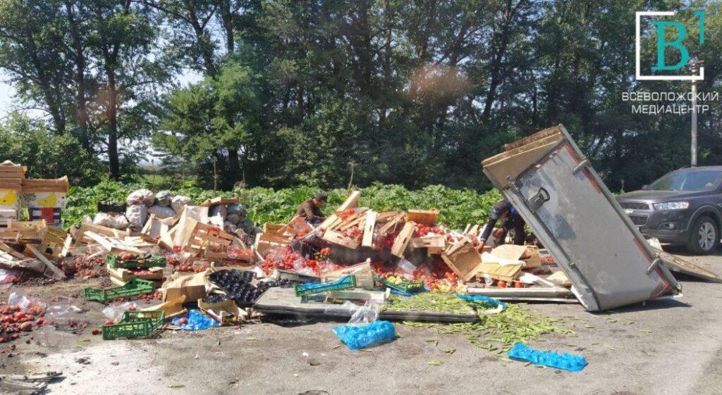 Во Всеволожском районе лихач лишил ленинградцев ягод, врезавшись в перевозивший их полуприцеп