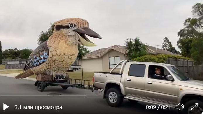 Австралиец соорудил скульптуру огромного какаду для поездки на фестиваль