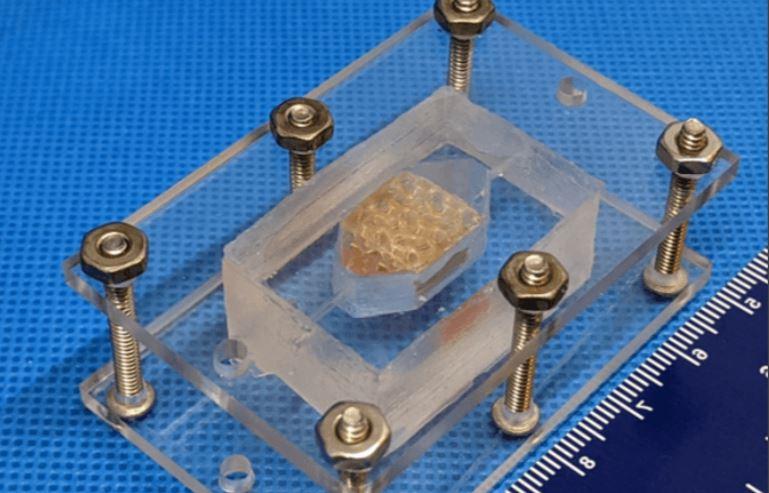 Американские учёные напечатали на 3D-принтере образец печени человека рекордного размера