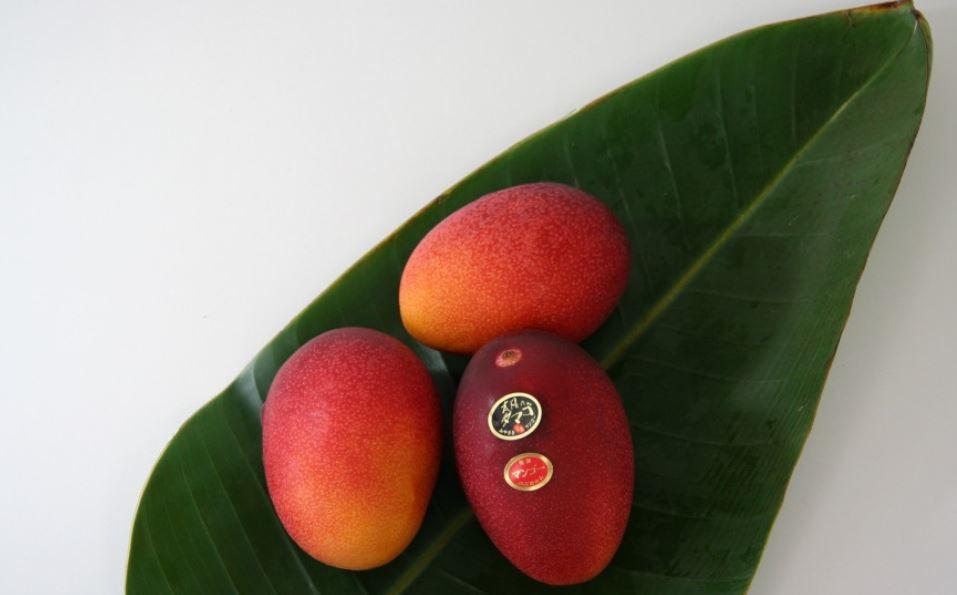 В Индии фермер выращивает манго, цена которого — более 2000 долларов