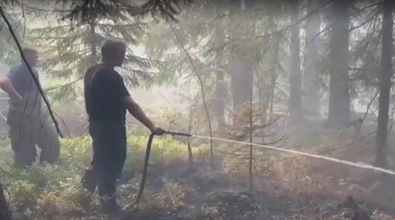 Сотрудники МЧС проводят проливку очагов возгорания на торфяниках в Сосновом Бору