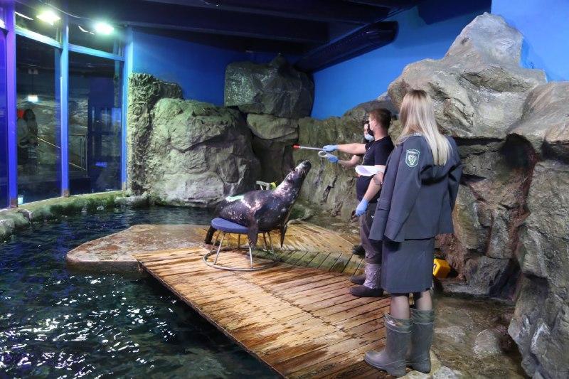 Петербургский океанариум на Марата получил лицензию на использование животных в культурно-зрелищных целях