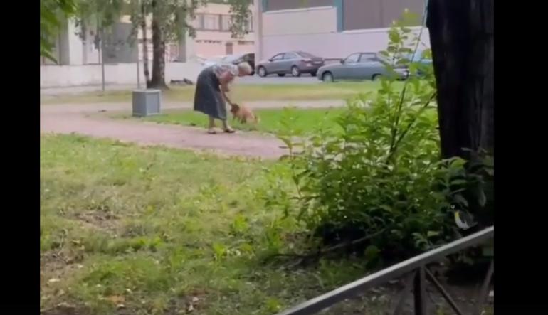 Петербуржцы засняли издевательства пожилой женщина над своей собакой