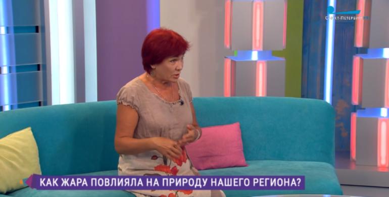 Петербуржцы еще могут надеяться на грибной сезон после аномальной жары