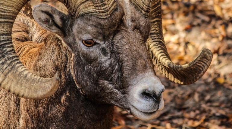 Ленобласть продала в Испанию полторы тонны бараньих кишок