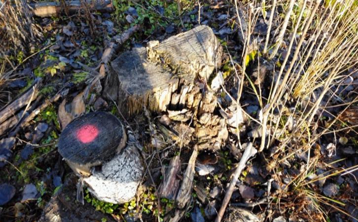 Следователи нашли организаторов незаконной вырубки леса в Ленобласти и отправили их в суд