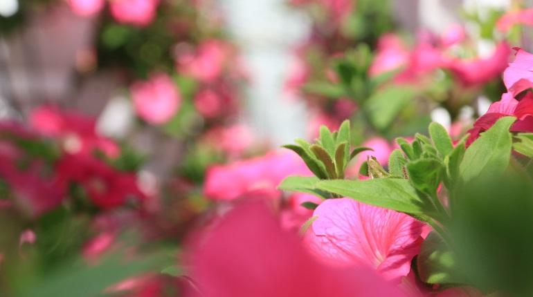 Второй сад непрерывного цветения появится в Приморском районе