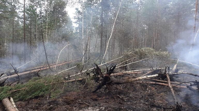 После сухой грозы в Волосово начался пожар
