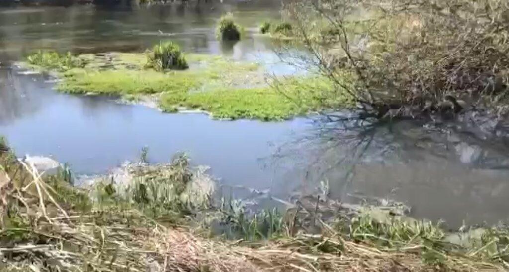 Росприроднадзор требует от коммунальщиков два миллиона рублей за загрязнение реки Ижора