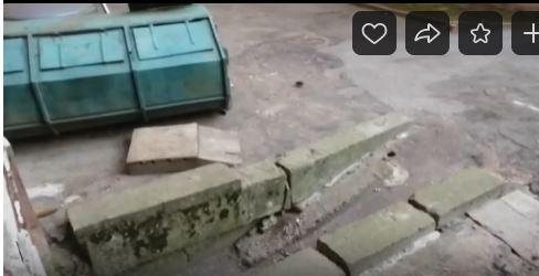 В Колпино двор жилого дома атаковали крысы