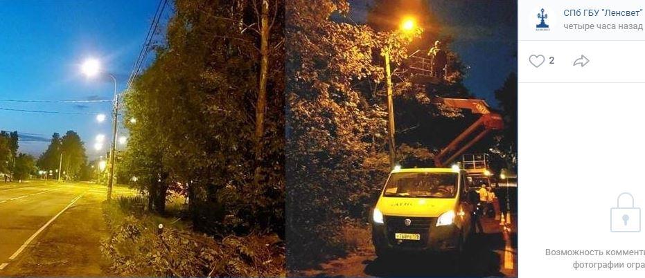 В Петродворцовом районе ветки деревьев оборвали электросети по 9 адресам