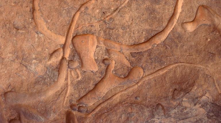 В США обнаружили окаменелые останки микрозавра размером с палец
