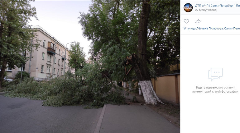 На улице Летчика Пилютова упавшее дерево заблокировало движение