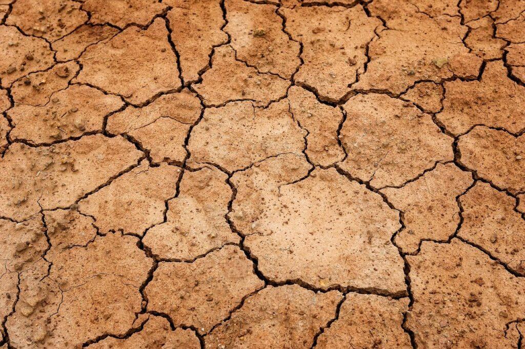 В Калифорнии из-за засухи фермеры для поиска воды обратились к экстрасенсам