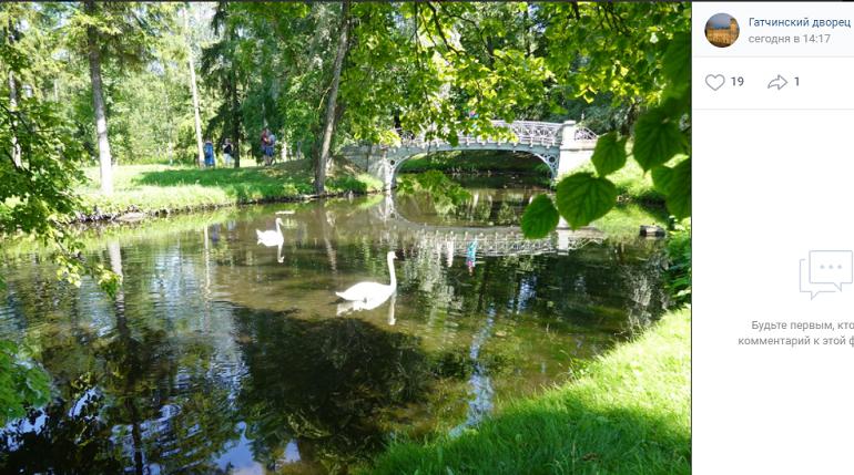 Подруга лебедя Георгия начала гулять по Белому озеру в Гатчинском парке