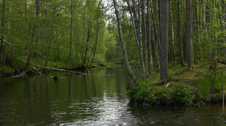 В Ленобласти на выходных усилят контроль за водоемами из-за аномальной жары