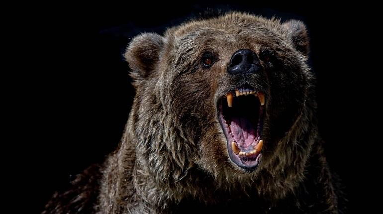 В Красноярском крае после нападения медведя на туристическую группу погиб человек