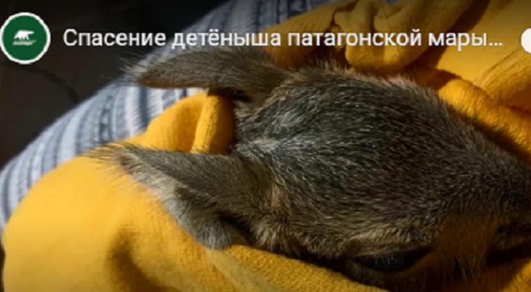 Мара Маруся вернулась к семье в Ленинградском зоопарке