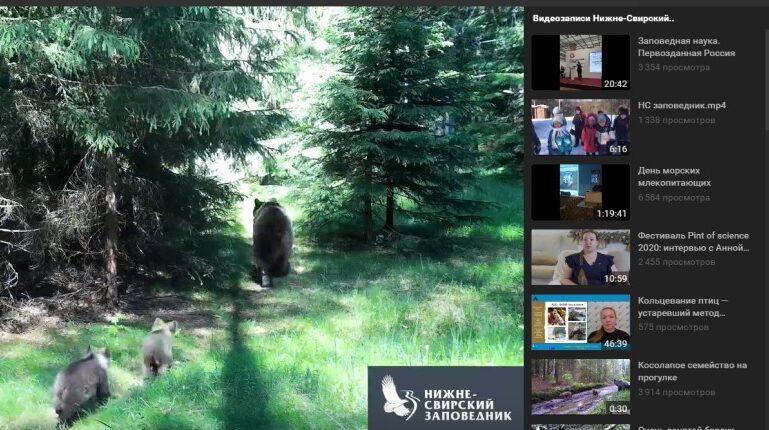 В заповеднике в Ленобласти заметили большую семью медведей впервые за 40 лет