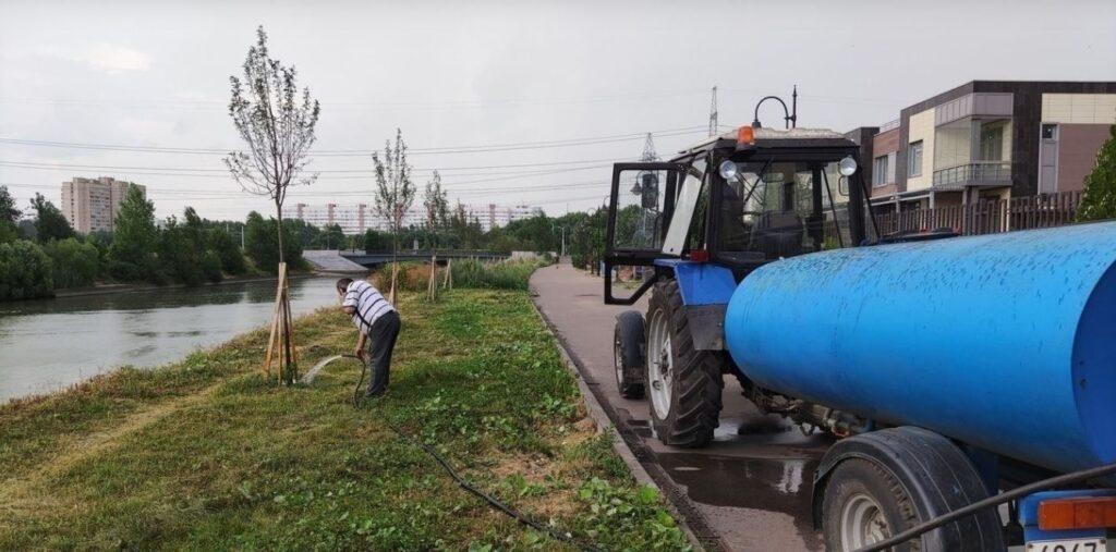 На Дудергофском канале высыхают яблони из-за аномальной жары