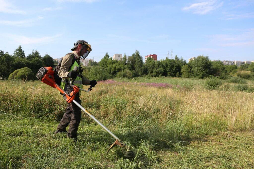 Жители Ленобласти составили карту скоплений борщевика