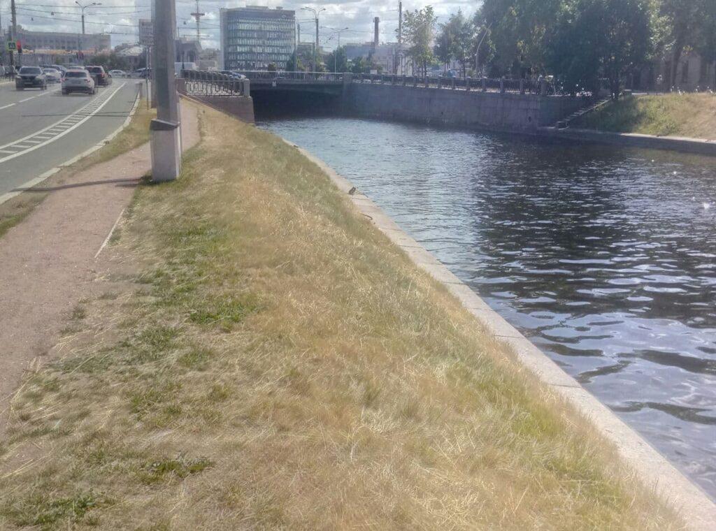 Трава на набережной Карповки стоимостью 28 миллионов превратилась в сено