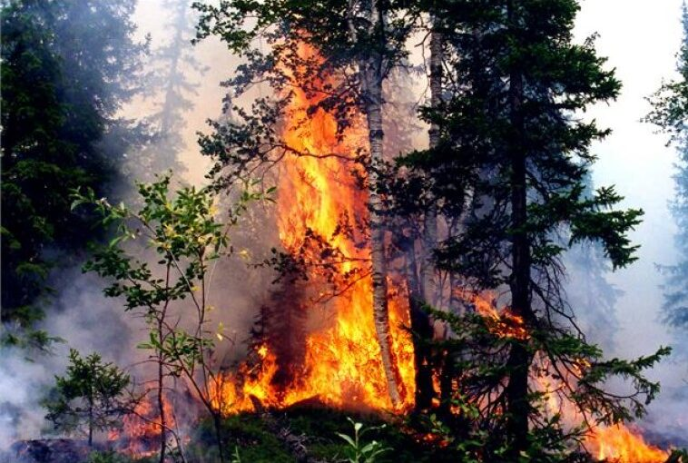 Площадь пожаров в Якутии с начала сезона составила рекордные 8,5 млн га