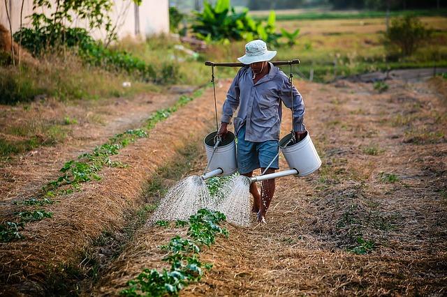Фермеры в Мексике вооружились против мафии для спасения авокадо, ежевики и себя