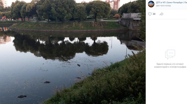 В Петербурге в пруду заметили сразу несколько погибших уток