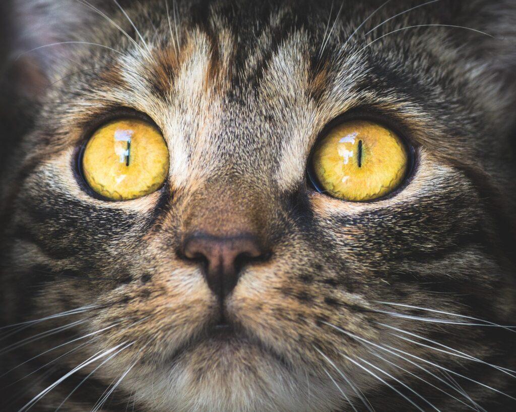В Великобритании от неизвестного вируса погибло 330 кошек