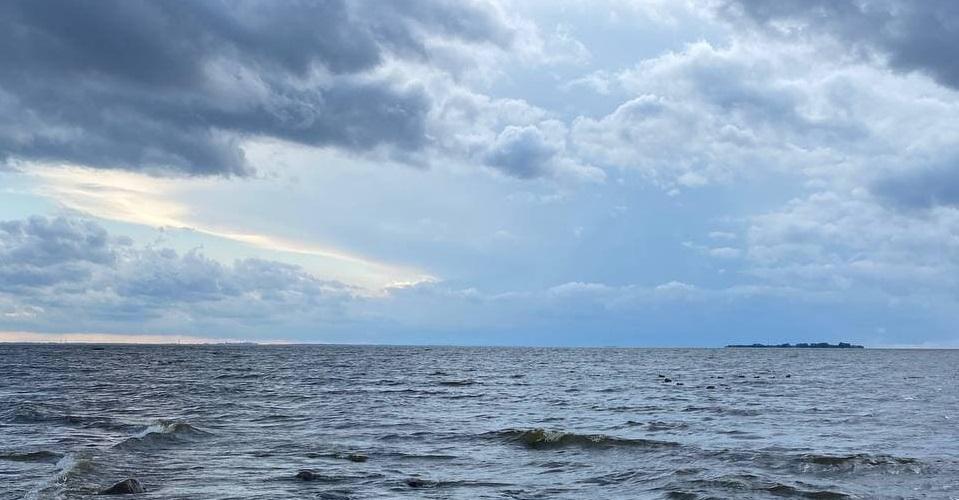 В Финском заливе нашли новый вид ракообразных