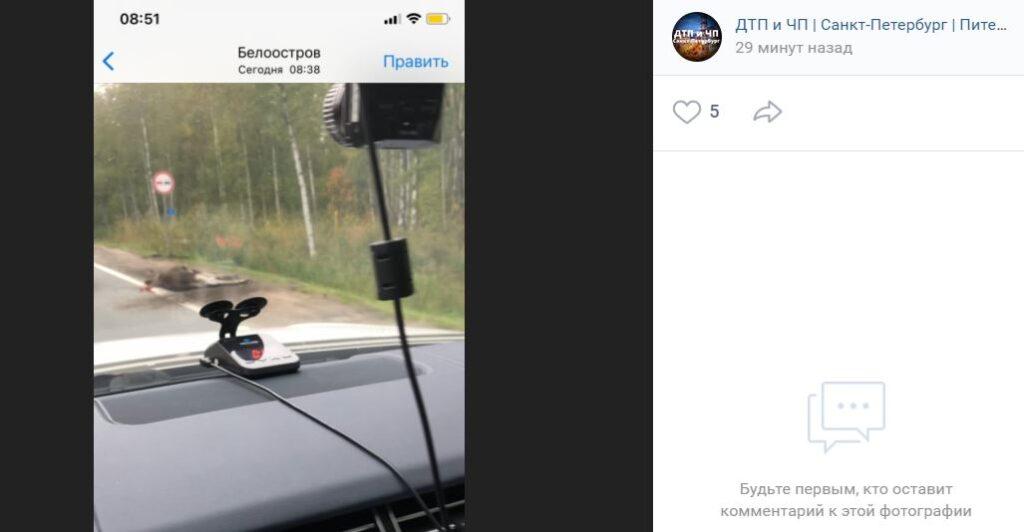 Лосёнка сбили на Зеленогорском шоссе