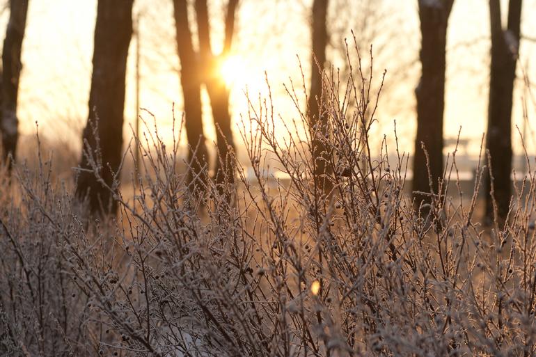 В выходные в Ленобласть придут заморозки до -3 градусов