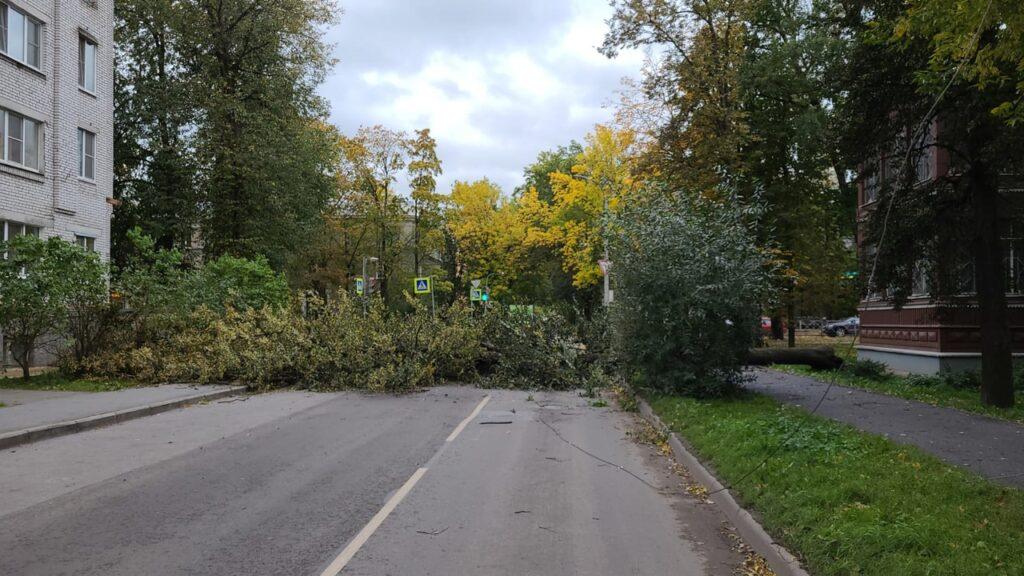 В Гатчине стихия повалила десяток деревьев на автомобили и тротуары