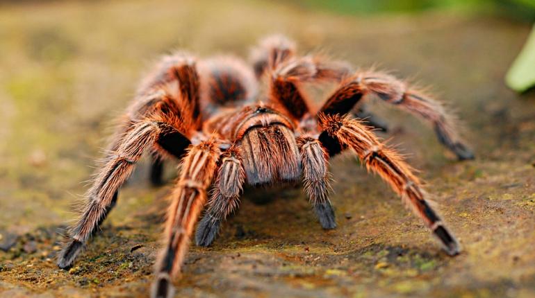 Россиянам напомнили об опасности ядовитых пауков и скорпионов