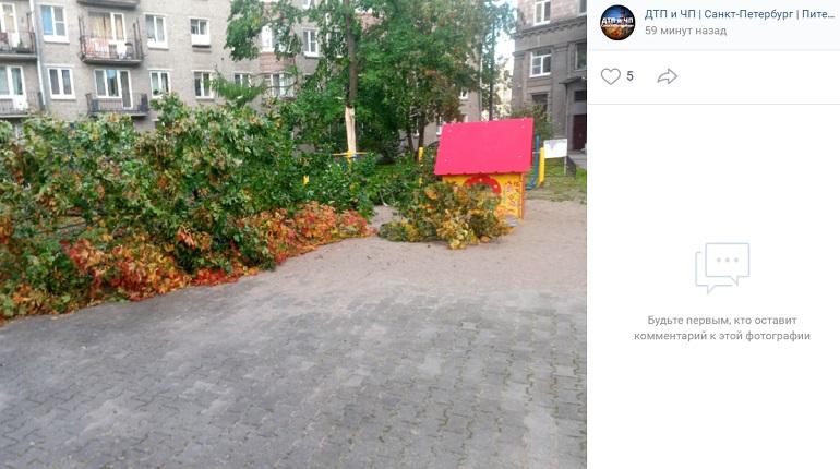В Автово штормовый ветер повалил дерево на детскую площадку