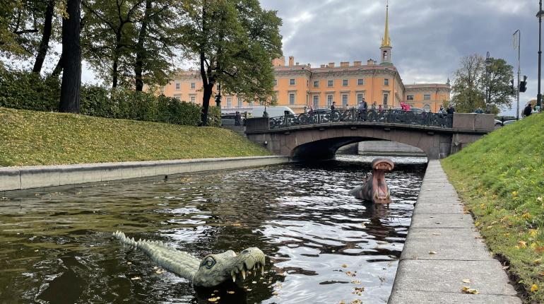 В акватории Петербурга заметили крокодила и бегемота