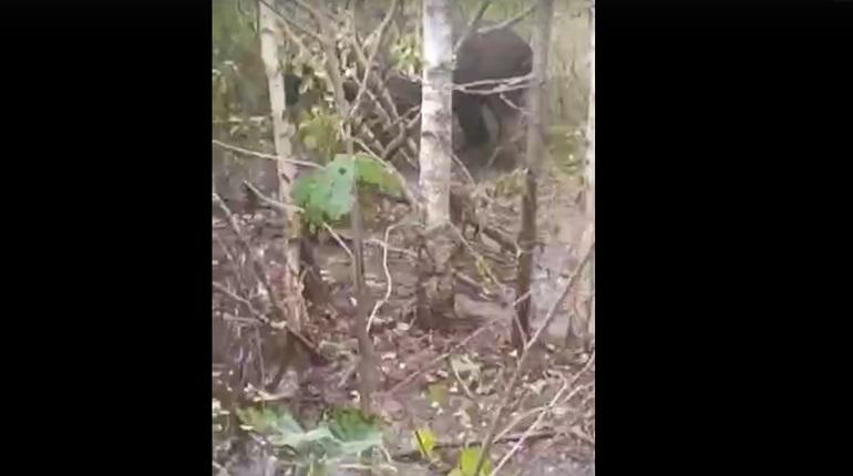 В Ленобласти освободили лося, запутавшегося в проводах
