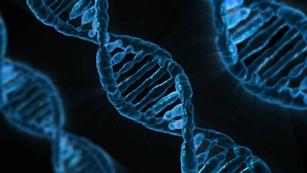 Science Advances: гормон роста помогает справляться с голодом