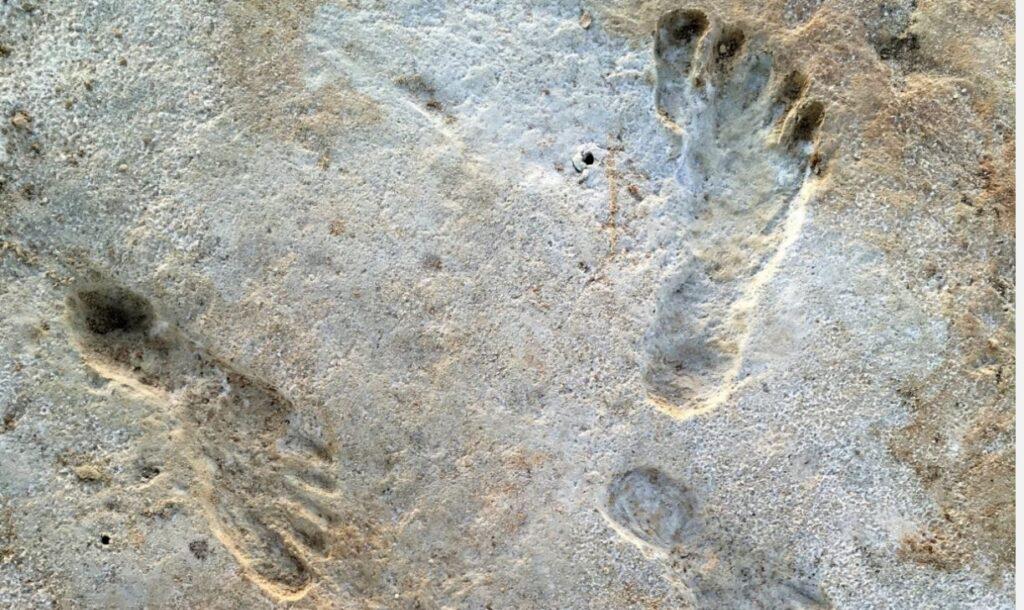 В США нашли следы человека возрастом 23 тысячи лет, что противоречит теориям заселения Америки