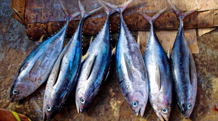 Рестораторы Петербурга ожидают дефицит тунца и значительное подорожание рыбы
