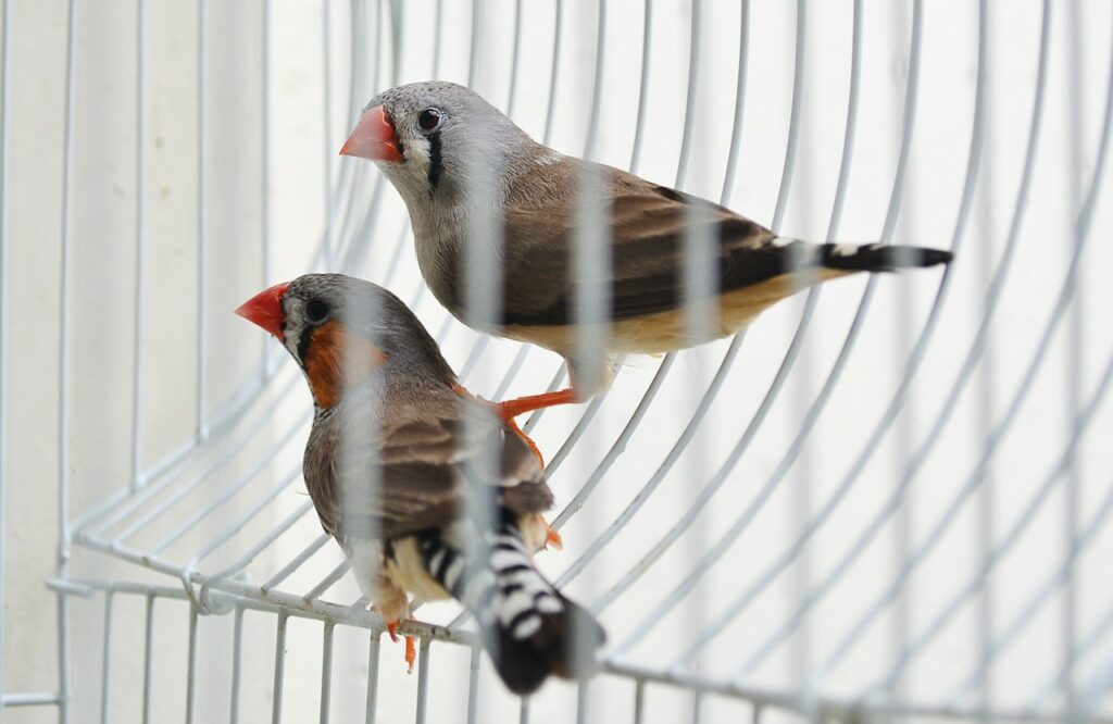 Орнитологи выяснили, что птенцы учатся петь еще находясь в яйце