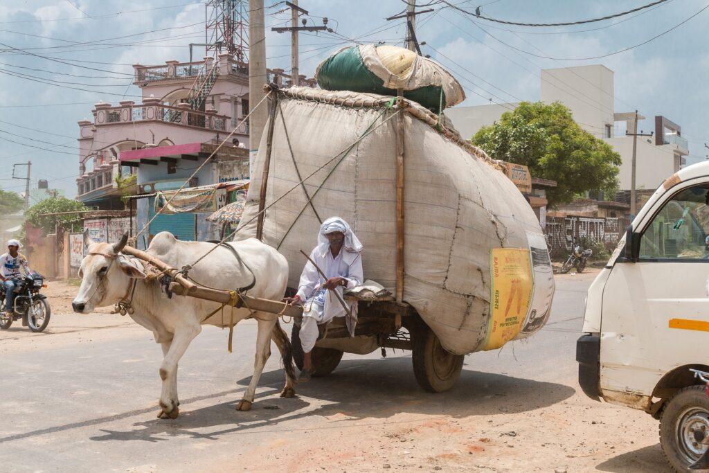 Симптомы смертельного вируса Nipah выявили у 11 человек в Индии