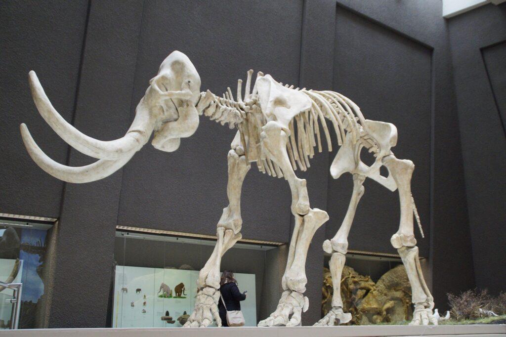 Ученые решили «воскресить» мамонтов и отправить их в арктическую тундру