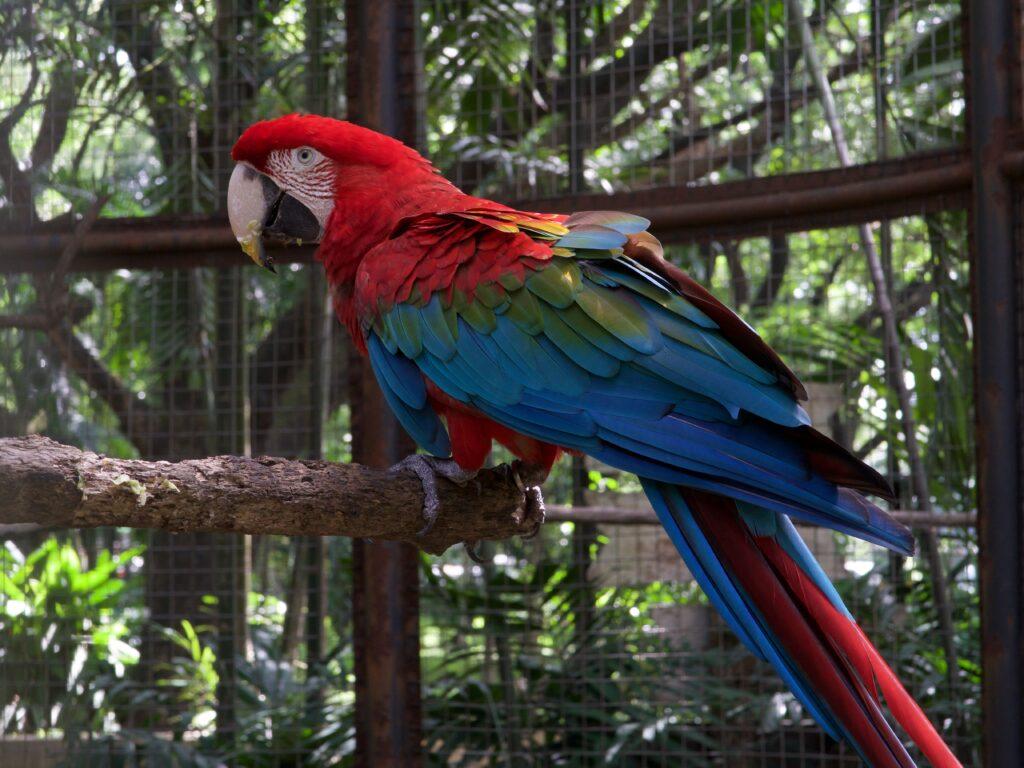 Перепись попугаев: генетическое вырождение Какапо исключили из возможных причин вымирания